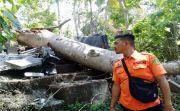 Pohon Tumbang Hancurkan Pura, Sarang Tawon Ganggu Evakuasi Pohon
