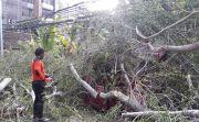 Dua Hari Hujan, Badung Dilanda Bencana Pohon Tumbang