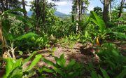 Hutan Bali Barat di Tukadaya Gundul, Dipagari Seperti Lahan Pribadi