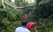 Hujan Lebat Guyur Gianyar, Pohon Tumbang dan Ular Bermunculan