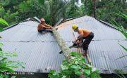 Pohon Kelapa Tumbang Timpa Rumah Warga di Karangasem