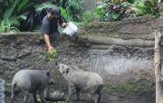 Kebun Binatang Tutup saat Pandemi Covid-19, Satwa Dirawat Penuh Ekstra