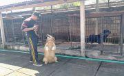 Modal Utama Sayang Binatang, Latihan Khusus Asah Skill Anjing K-9
