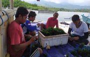 Tak Terserap Pabrik, Nelayan Sumberkima Jual Murah Rumput Laut