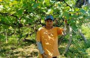 Kanwilkumham Bali Dorong Pemkab Patenkan Anggur Buleleng