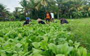 Serap Produk Pertanian Lokal, Pemprov Bali Buka Pasar Gotong Royong