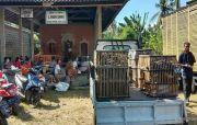 Tekan Laju Inflasi, Kelompok Wanita Tani Digelontor Ayam Kampung