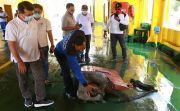 Terseret Arus, Tabrak Breakwater, Kapal Nusa Jaya Abadi Rusak Parah
