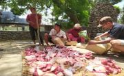 Permintaan Pasar Naik, Dorong Warga Bali Pelihara Babi Hitam