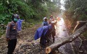 Hujan Lebat, Pohon Tumbang Hadang Jalan Payangan Gianyar