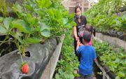 Pandemi Covid, Destinasi Wisata di  Buleleng Andalkan Wisatawan Lokal