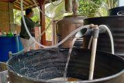 Serap Ratusan Liter Bahan Baku Arak, Suplai Pabrik Sake di Denpasar