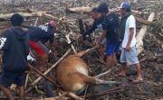 Banjir di Pekutatan Akibatkan Rumah Hancur, Ternak Hanyut, Jalan Putus