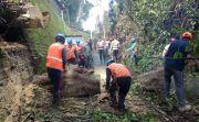 Diguyur Hujan Deras, 5 Titik Bencana Alam Terjadi di Tabanan