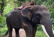 Pose Bugil di Atas Gajah, Model Cantik Asal Rusia Diperiksa Polda Bali