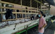 Sulap Lahan Adventure Jadi Kandang, Ajak Karyawan Beternak Kambing