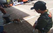 Rabies Kembali Marak di Karangasem, Puluhan Orang Diterkam Anjing Gila