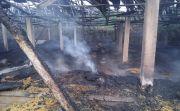Kandang Terbakar, Puluhan Ribu Bibit Ayam Boiler Hangus Terpanggang