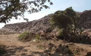 Gunungan Sampah TPA Bengkala Buleleng sudah Setinggi Pohon Kelapa
