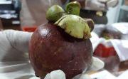 Berhasil Rajai Ekspor ke Tiongkok, Manggis Bali Mengincar Pasar Eropa