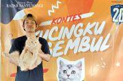 Kucing yang Dudah Dikebiri Pun Boleh Daftar Jadi Peserta Kontes