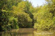 Asyiknya Menikmati Hutan Mangrove Sambil Susur Sungai di Pantai Cemara