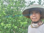 Kembangkan Jeruk Siam Madu dan Pontianak
