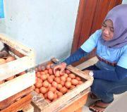 Selama Perayaan Muludan Harga Telur Stabil