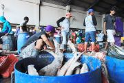 Masuki Puasa, Pasokan dan Harga Ikan Laut Normal