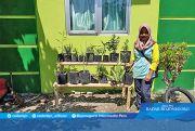 Kader Posyandu Balita giat mengembangkan Hortikultura