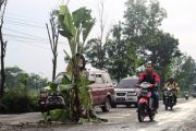Pohon Pisang Setinggi Tiga Meter 'Tumbuh' di Jalan Nasional Trans Jawa