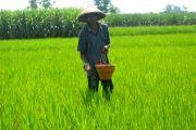 Jatah Pupuk Subdisi untuk Petani Jombang Dipangkas 51 Persen