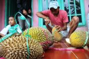 Durian Simas Wonosalam, Varietas yang Dinilai Aman untuk Kesehatan