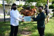 Rayakan Idul Adha, PG Djombang Baru Sembelih Tiga Ekor Sapi