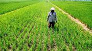 Jatah Dibatasi, Petani di Gudo Jombang Sulit Dapatkan Pupuk Subsidi