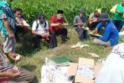 Wabup Sumrambah Optimistis Pertanian Banjardowo Meningkat