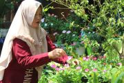 Cantiknya Bunga Vinca, Murah dan Mudah Dirawat dengan Bekas Cuci Beras