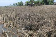 Petani Berharap Ada Bantuan dari Pemkab