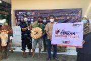 Berkah Qurban 1.000 Sapi, BPKH dan LAZ-UQ Sasar Pelosok Negeri
