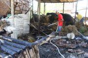 Main Korek di Jerami, Kandang Sapi Terbakar