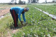PNS Itu Pengabdian, Bertani…Itu Jiwa Saya