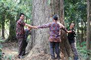 Konservasi demi Pohon Usia Ratusan Tahun