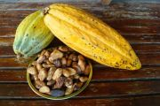 Kakao Sumberlumbu
