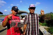 Hama Tikus Serang Puluhan Hektare Sawah