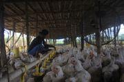 Stok Berkurang, Daging Ayam di Pasar Kandangan Rp 28 Ribu Per Kg