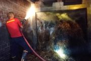 Bakar Sampah, Kandang Sapi di Sukomoro Jadi Arang