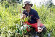 Muncak ke Gunung Ungaran, Tim DAC Tanam Pohon Mahoni dan Kaliandra