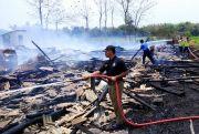 Kandang Ludes Terbakar, Ribuan Ayam Terpanggang Hidup-hidup