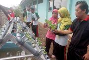 Menuju Sekolah Adiwiyata, SMPN 2 Trangkil Manfaatkan IPAL Air Wudu