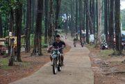 Suguhi Hamparan Pinus, Juga Spot Insatagramable